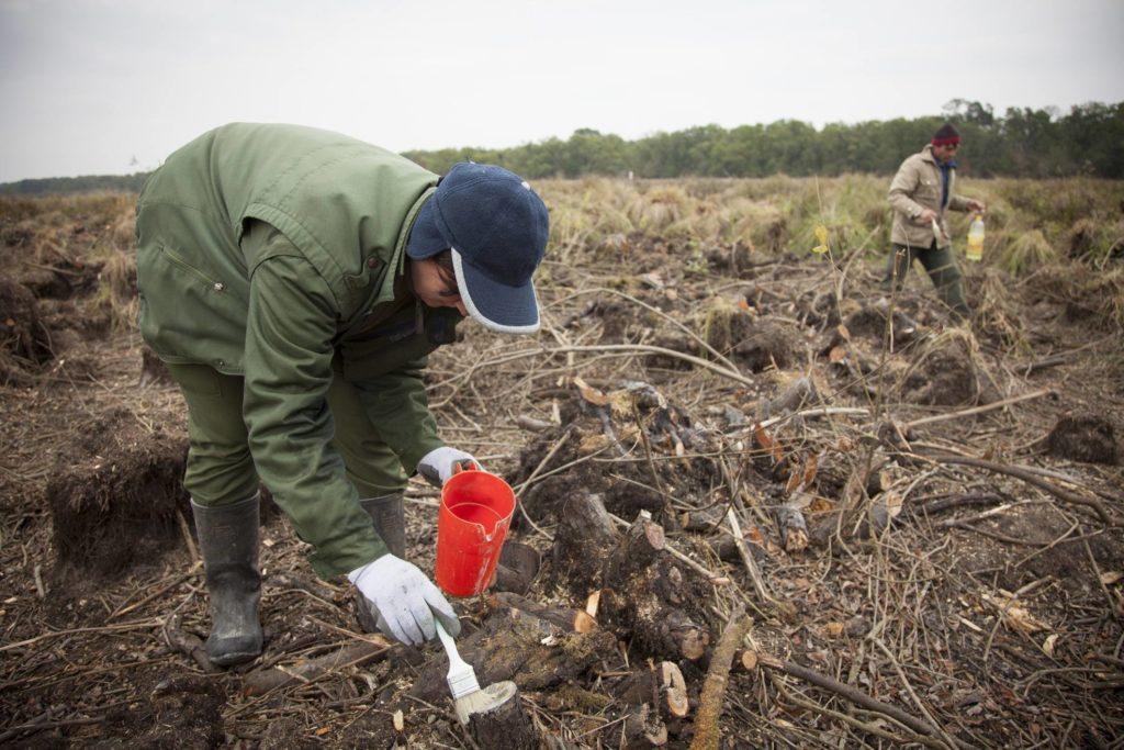 Rekonstrukcija bare Semenjača (Foto: WWF/Szilard Kovach)