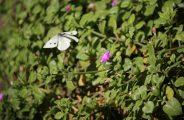 butterfly-1148848_1920