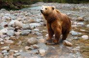 bear-1376361_1920