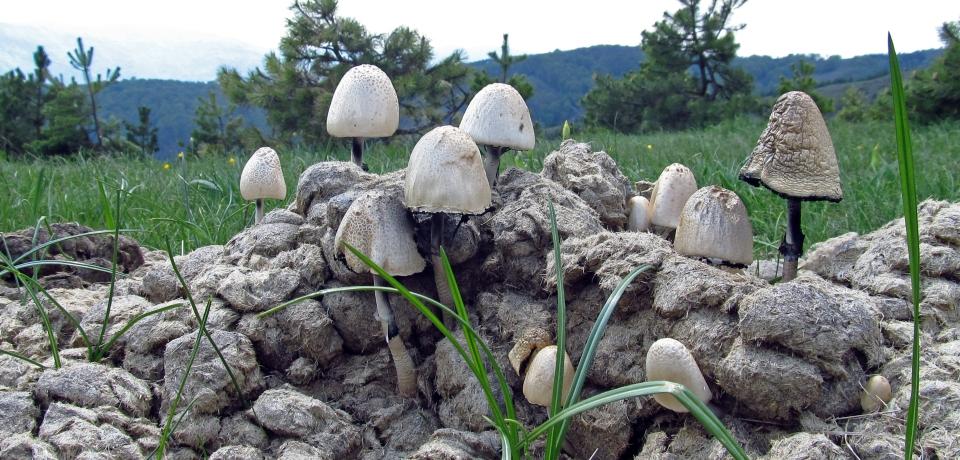 gljive01