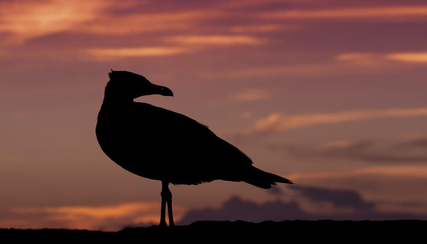seagull-667046_1920
